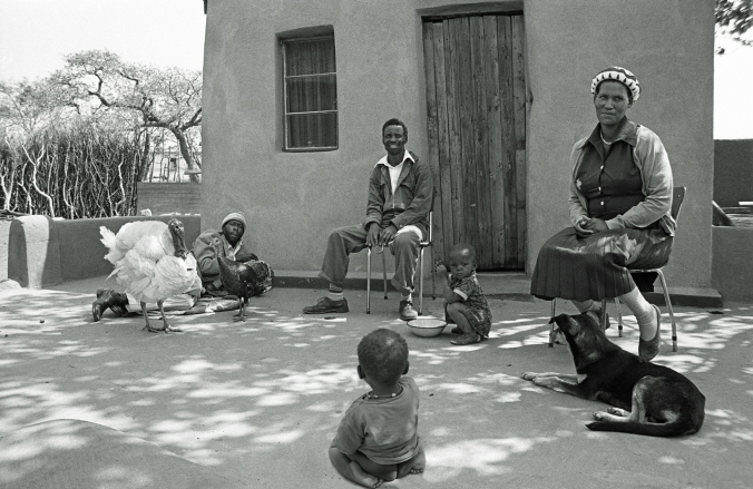 866943a Turkey and family at home Braklaagte 15 Apr BW& 30 150