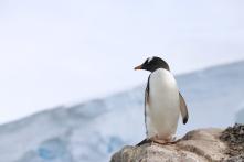 The Penguin Watchers 14